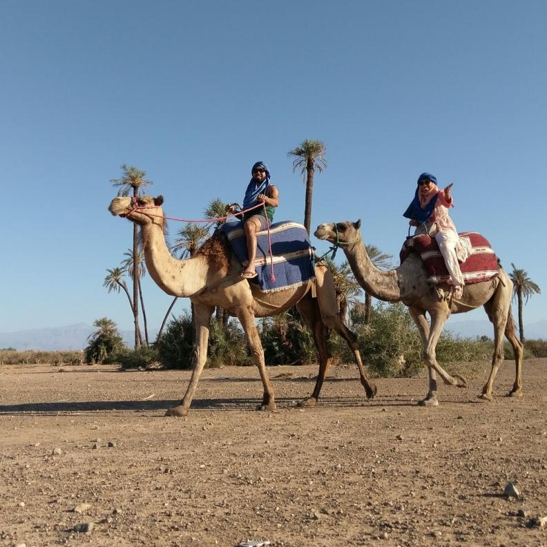 jax-on-a-camel
